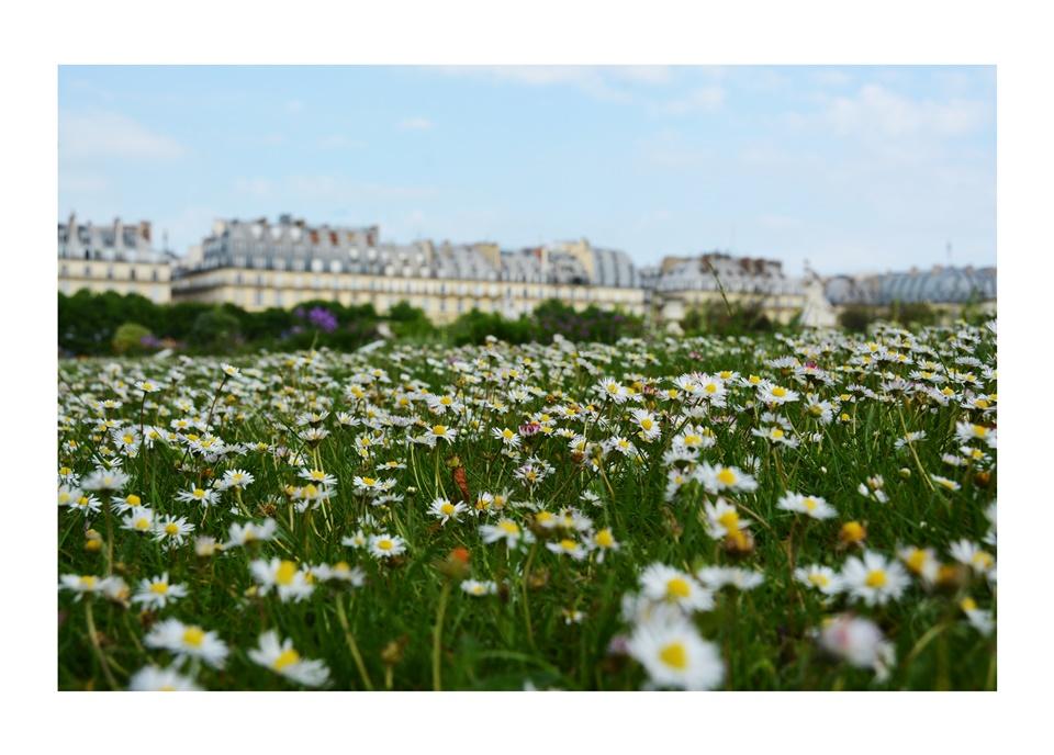 2015_05_Paris_Jardin_02
