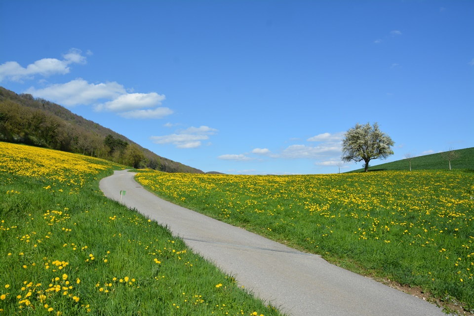 Erlinsbach-Erzbach-Hügellandschaft-Fotografie (4)