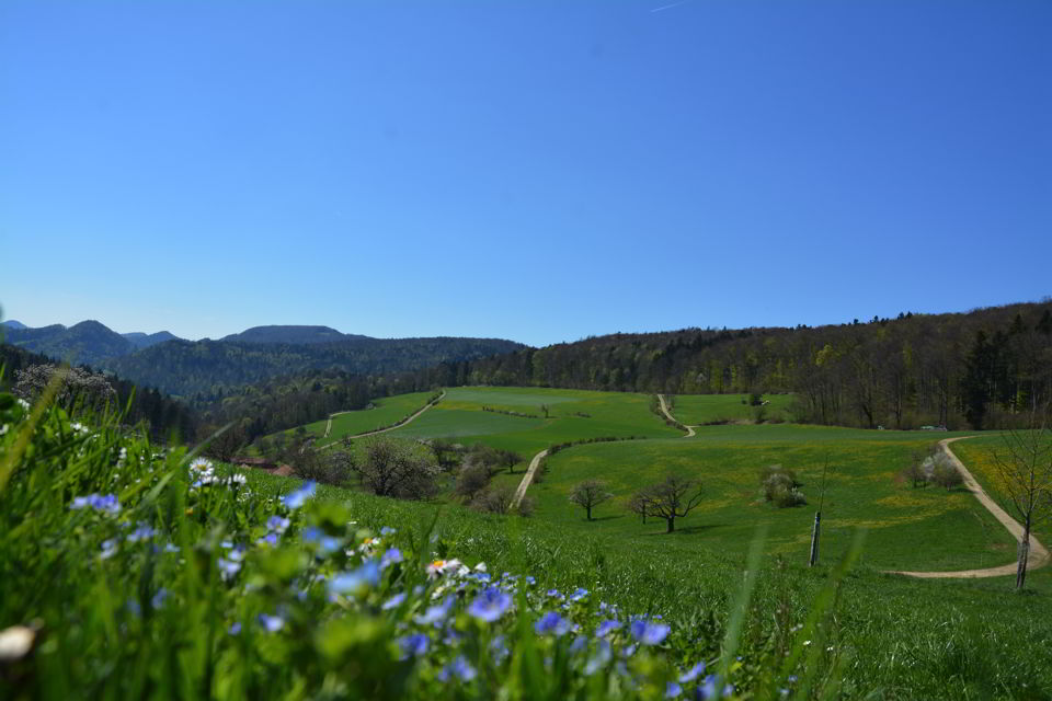 aarau-fruehling-weiden-fotografie