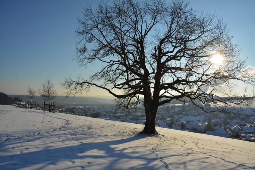 aarau-winter-erlinsbach-fotografie