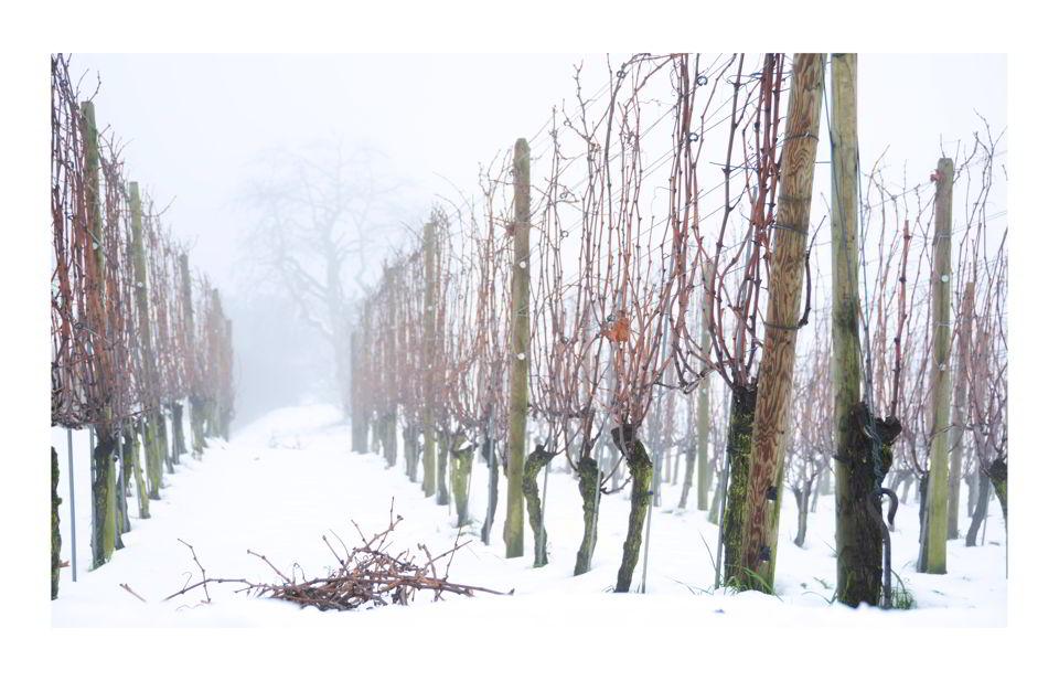 aarau-winter-rebberg-fotografie